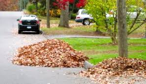 Curbside Leaf Pickup